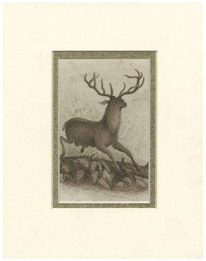 A 19th Century American Folk Art Drawing Of A Stag