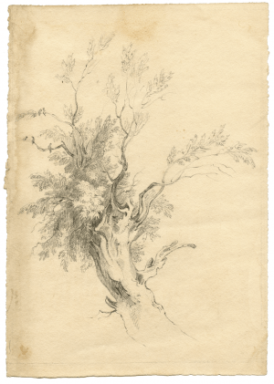 John Constable R.A. Study Of A Willow Tree Master Drawing