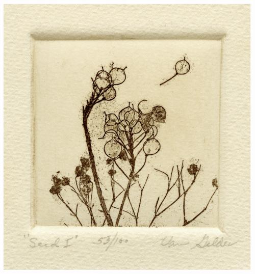 "A Vintage Botanical Minimalist Etching Print ""Seed I"" Signed ""Van Gelder"""