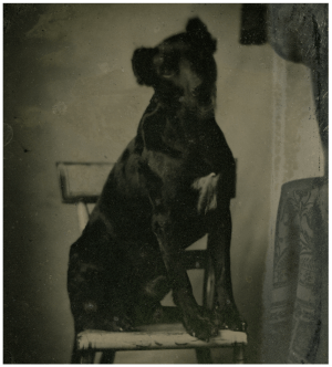 A 19th Century Tintype Photograph Of A Dog On A Chair