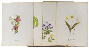 An Antique Portfolio Of 25 Wild Flower Drawings March 1900 Iris Lily Orchids